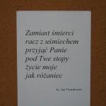 zdj-20